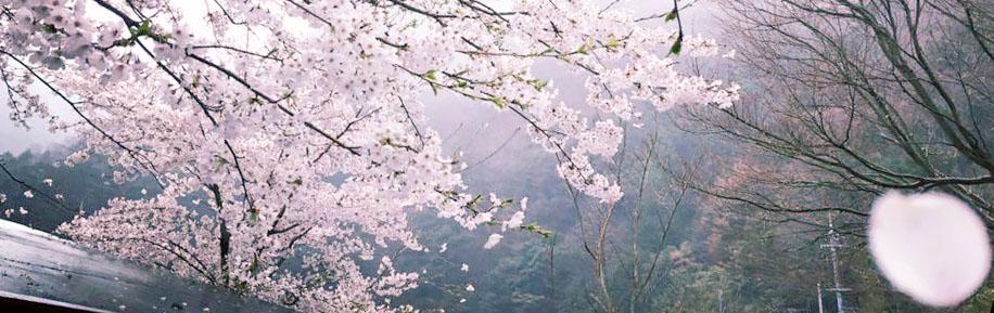 奈良 野迫川村 キャンプ場 アドベンチャーランド アドベンチャーワールド 高野山